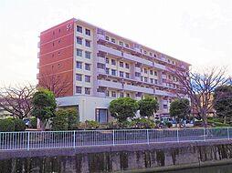 金沢シーサイドタウン並木