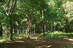 石橋山市民の森...