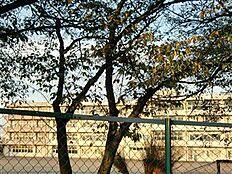 土浦市立土浦第三中学校(1730m)