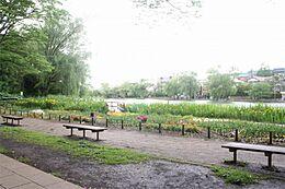 石神井公園(863m)