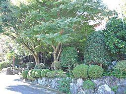 静岡県伊東市八幡野