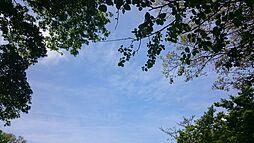 武蔵関公園は池...