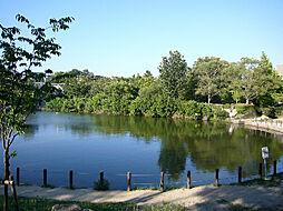樋之池公園(2...
