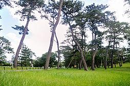 稲毛公園(65...