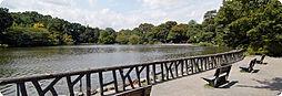 公園善福寺公園...