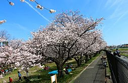 船橋川緑地