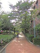 現地近くの街路樹通り。気ままに散歩している人々が街の雰囲気を和ませます。