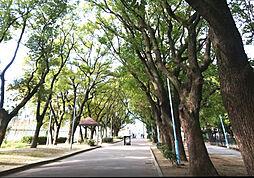 平野白鷺公園:...
