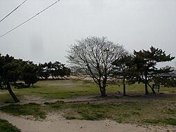 御前浜公園(4...