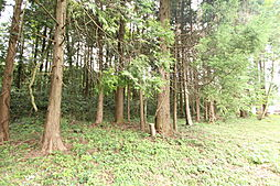 この木のあたり...
