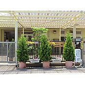 神山幼稚園
