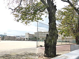 野田中学校 1...