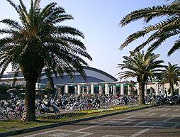 鵠沼運動公園