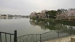 公園 大池総合...