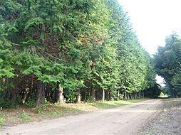 写真左の山林が...