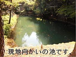 現地向かいの池...
