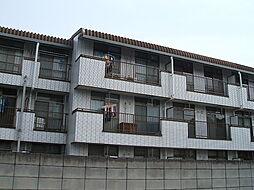 ダンディリオン松戸[212号室]の外観