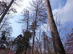 風にそよぐ木々...