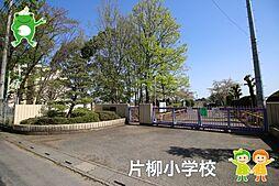 片柳小学校(1...