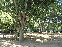 宮の台公園 6...