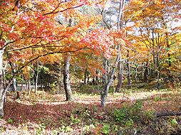 秋にはこのよう...