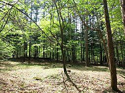大きな木立が多...