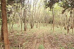 東側は木立が残...
