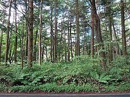 大きな木立に囲...