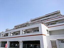 アデニウム玉川学園