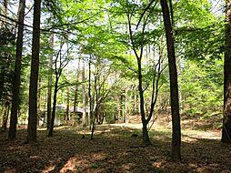 旧軽井沢の森に...
