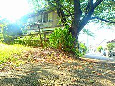 桜の木が美しい前面道路との接道部分。道路向かいは緑道があり、平山城址公園へと続きます。