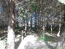敷地内には木が...