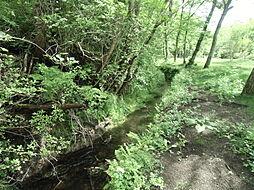 西側水路、鴨が...