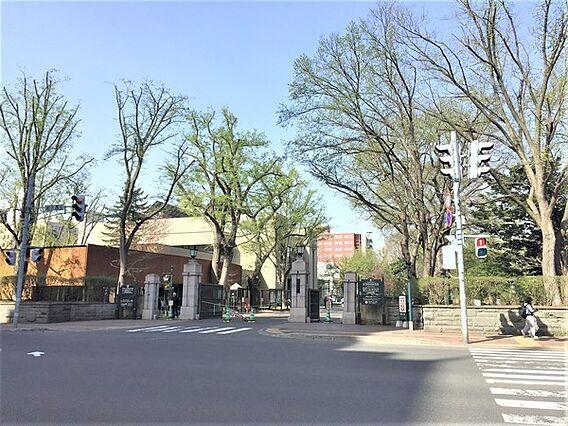 北海道大学まで...