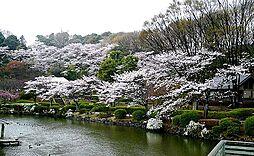 薬師池公園(桜...