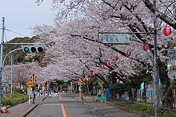 春には桜祭りが...