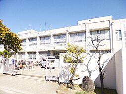 中学校 堺市立...
