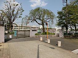 大泉学園桜小学...