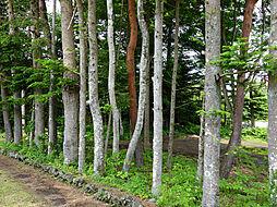 沢山の木々に囲...