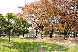 公園青山公園ま...