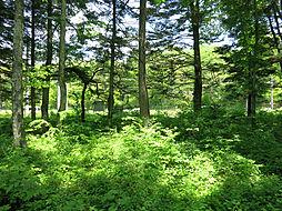 木立の中で森林...