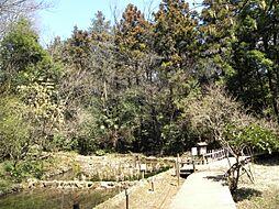 かしのき山公園...