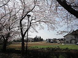 桜並木から見る...
