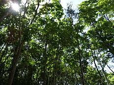 木を残しているので木陰があり自然と近い雰囲気を維持できます