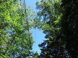 高い樹木が豊富...