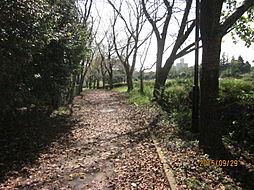 周辺環境1 桜...