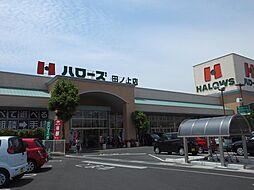 ハローズ田ノ上...