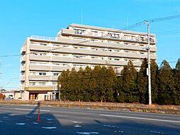 阿見町 サンクレイドル荒川沖 8階 中古マンション
