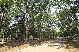 代々木公園まで1100m