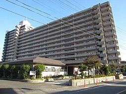 岡崎市中島町字カラムシ